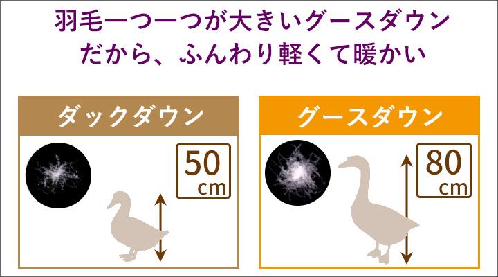 ダウンは羽毛一つ一つが大きいグースダウンを使用。ふんわり軽くて暖かい!