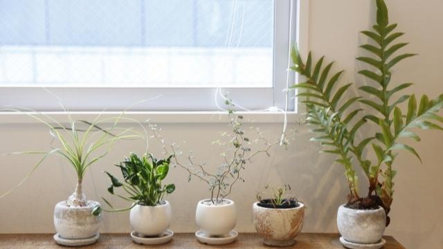 北欧インテリアに合う植物の選び方とコーディネート方法