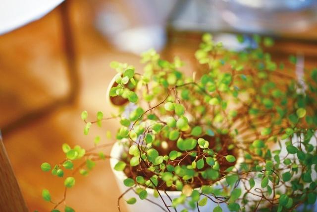 北欧インテリアにぴったりの植物5選