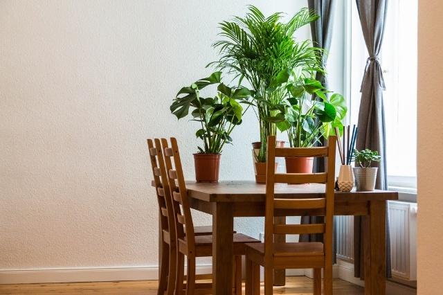 植物を選ぶときは世話しやすさとサイズに注目!
