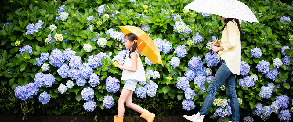6月の梅雨の時期の掛け布団